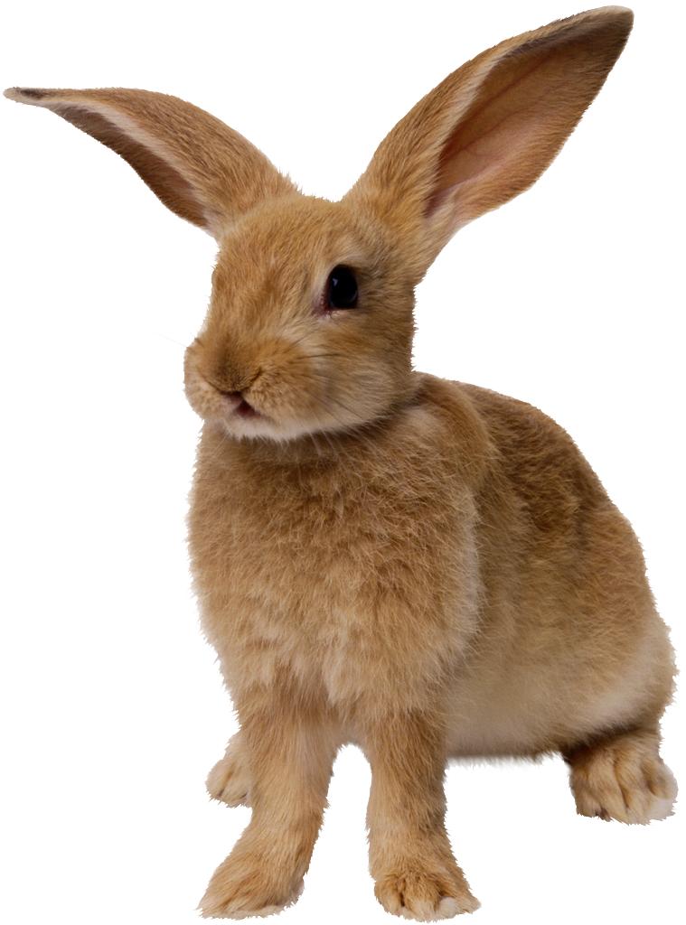 'De konijnen van de konijnenwarande': schemerdieren in het insolventierecht